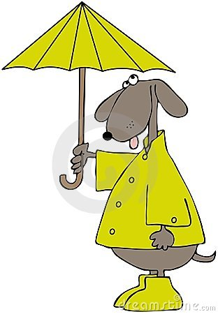 Dog In A Raincoat