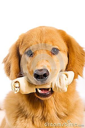 Dog with a rawhide bone