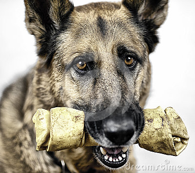 Dog with Rawhide Treat