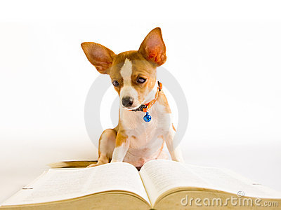 Dog read book