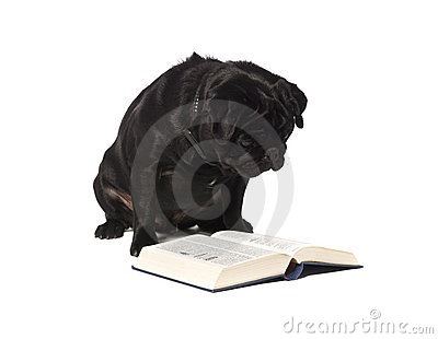 Dog Reading A Book Stock Images - Image: 11255094
