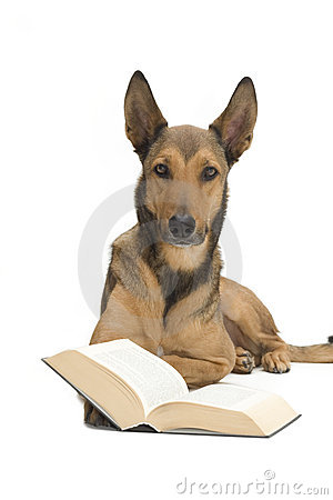 Dog reading a book / bible