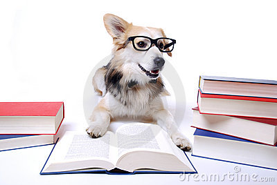 Dog reads book
