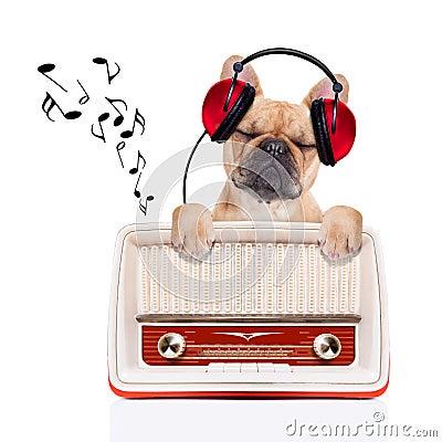 Free Dog   Relax Music Stock Photo - 46542940