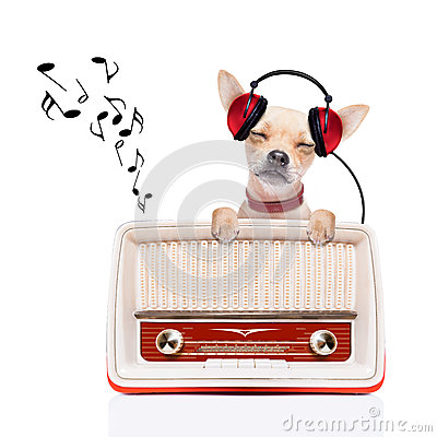 Free Dog   Relax Music Stock Photography - 46543602