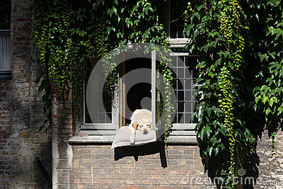 Dog Relaxing in Bruges