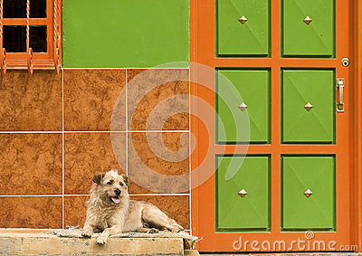 Dog Resting by Colorful Wall