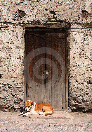 Dog resting in a doorway