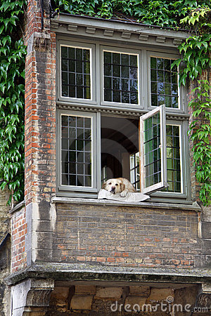 Dog resting on a window