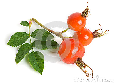 Dog rose (Rosa canina) fruits