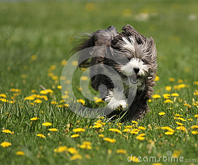 A dog running in a field.