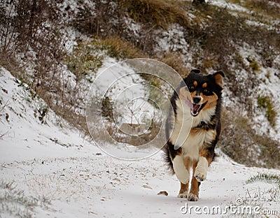 Dog running in snow