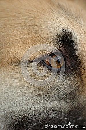 Dog s eye