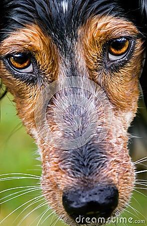 dog s eyes