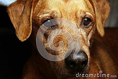 Dog s face