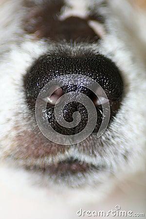 Dog s Nose