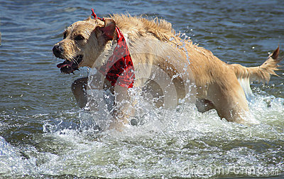 Dog s Play time at the Lake