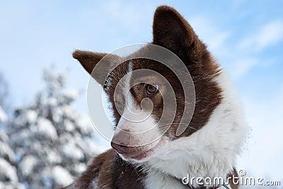 Dog s portrait