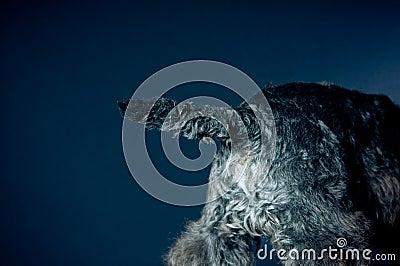 Dog s tail
