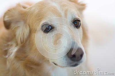 Dog with sad expression