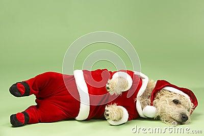 Dog In Santa Costume