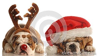 Dog santa and rudolph