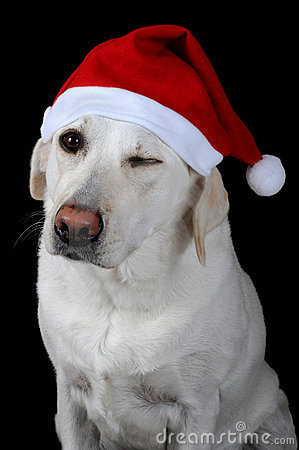 Dog with Santa s hat