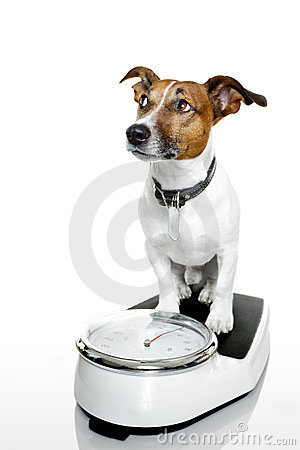 Free Dog Scale Royalty Free Stock Photos - 23515948
