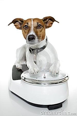 Dog scale