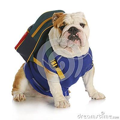 Free Dog School Royalty Free Stock Image - 22000746