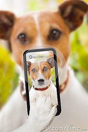 Free Dog Selfie Stock Photos - 39946483