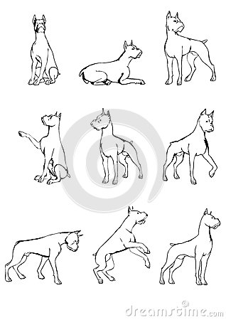 Set Of Dog Sketches Royalty Free Stock Photo Image 38631545