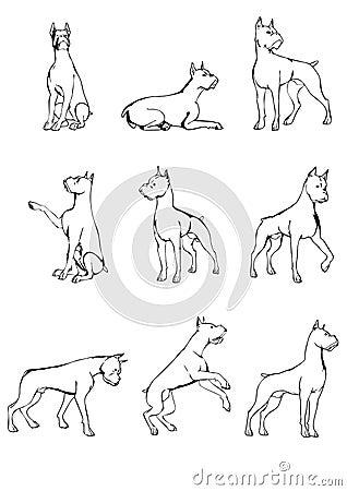 Set of dog sketches