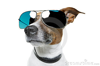 Dog in shades
