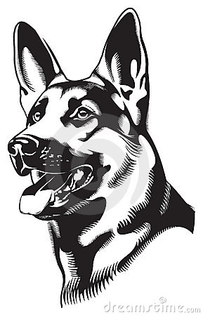 Dog. Shepherd