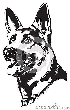 Free Dog. Shepherd Stock Photo - 10473500