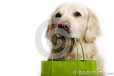Dog shopping