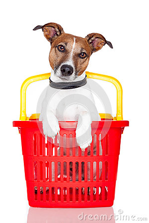 Dog in a  shopping basket