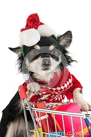 Dog shopping for Christmas