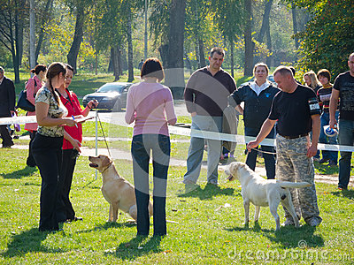 Dog show Editorial Stock Image