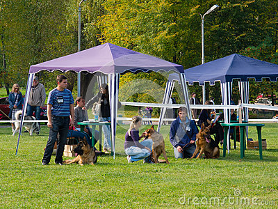 Dog show Editorial Stock Photo