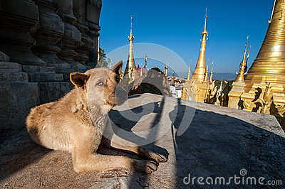 Dog at Shwe Indein Pagodas