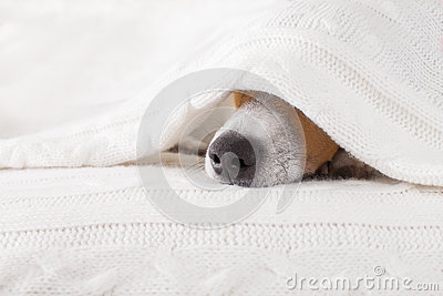 Dog sick , ill or sleeping Stock Photo