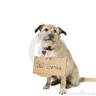 Dog with sign hanging