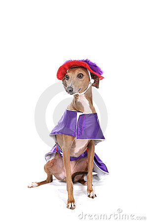Dog in silly purple and red costume