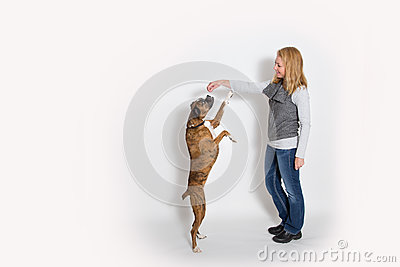 Dog sits up for a treat Stock Photo