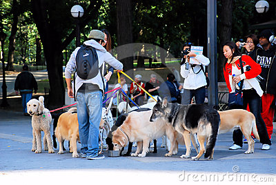 Dog sitter Editorial Stock Photo