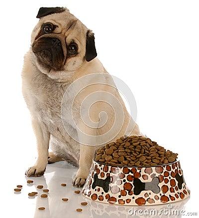 Dog sitting at food dish