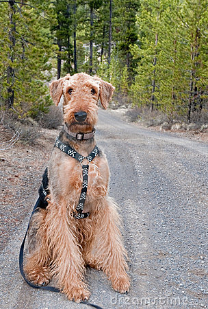 Dog sitting on gravel forest road