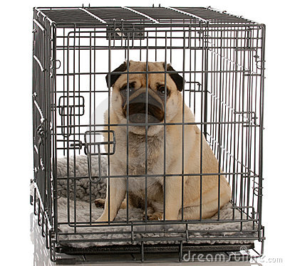 Free Dog Sitting In Wire Crate Stock Image - 11722001